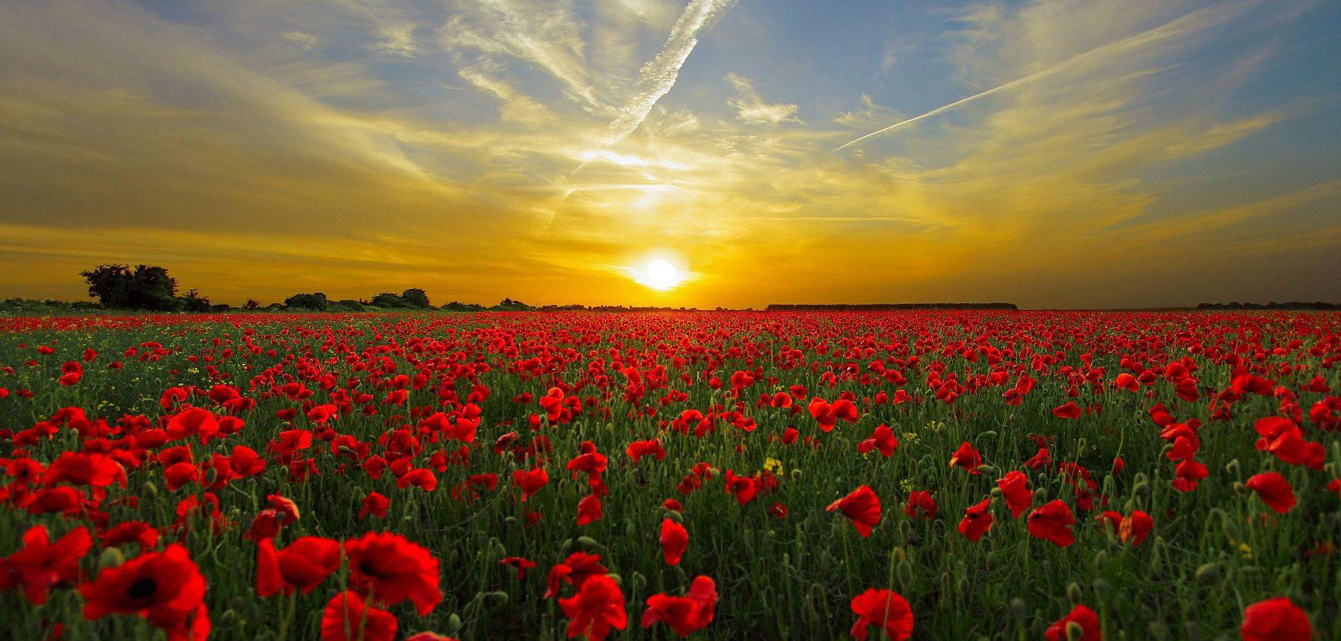 Sunrise over flowers