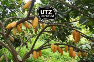What is UTZ?