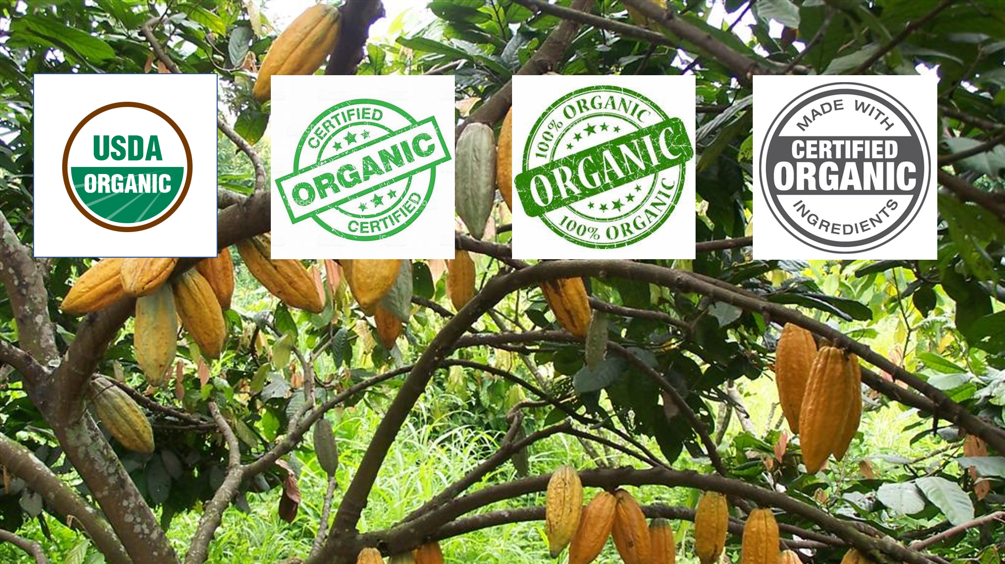 3 Compelling Reasons to Choose Organic Chocolate