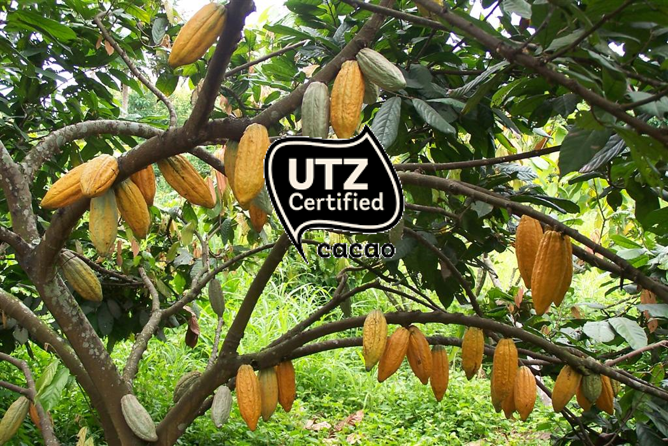 What You Need To Know About UTZ And Chocolate >Video>What You Need To Know About UTZ And Chocolate