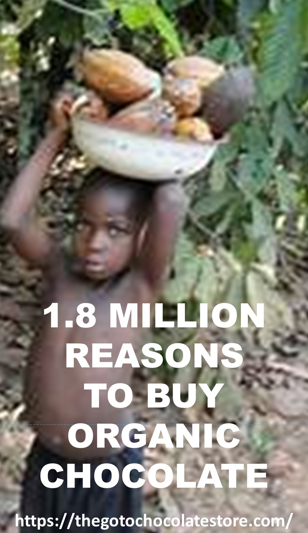 1.8 Million Reasons to Buy Organic Chocolate