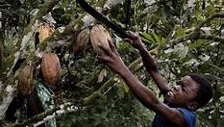 Child labor in cocoa regions